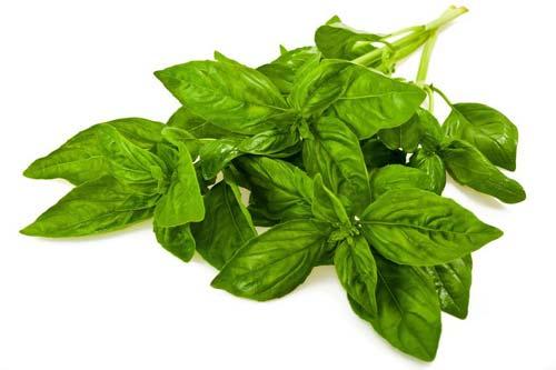 manfaat-daun-kemangi-untuk-kesehatan-pria-dan-wanita