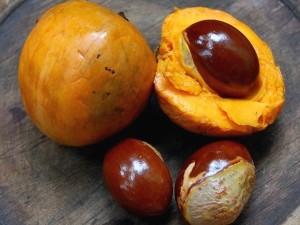 buah-alkesa