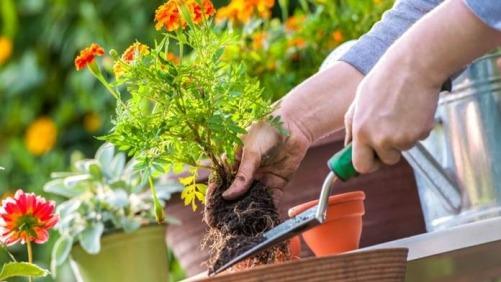 Tips-Berkebun-Hemat-Tapi-Menguntungkan-di-Rumah (1)