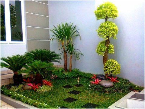 Kebun Minimalis