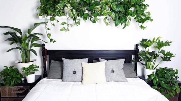 Tanaman Untuk Kamar Tidur
